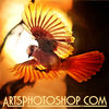 Arts Photoshop